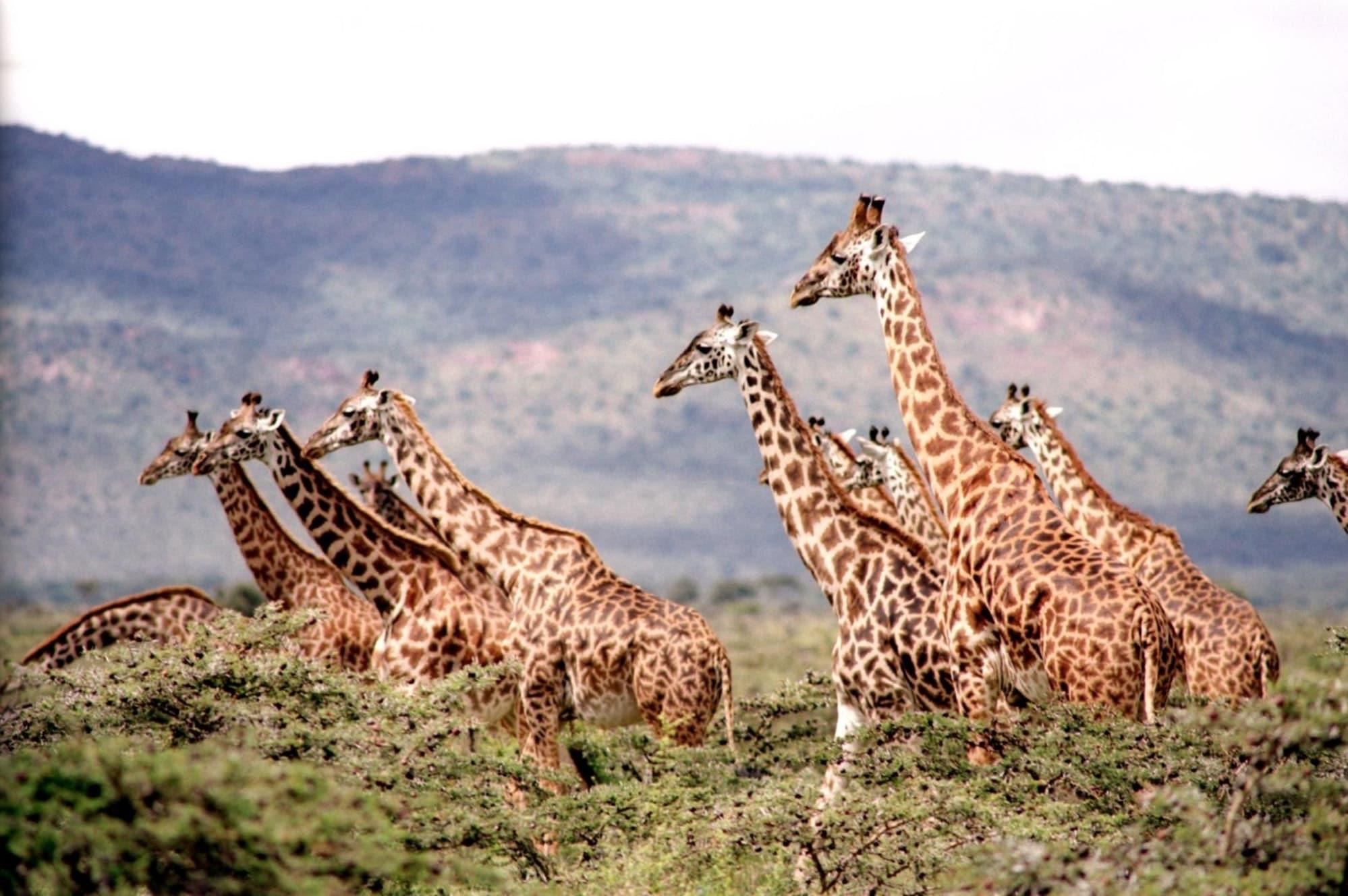 Namibië In Zuid-Afrika